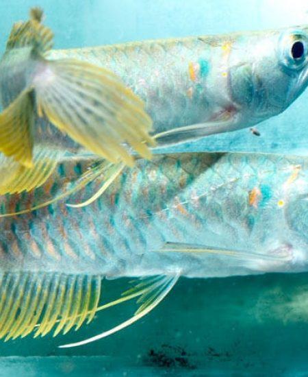 natfish2